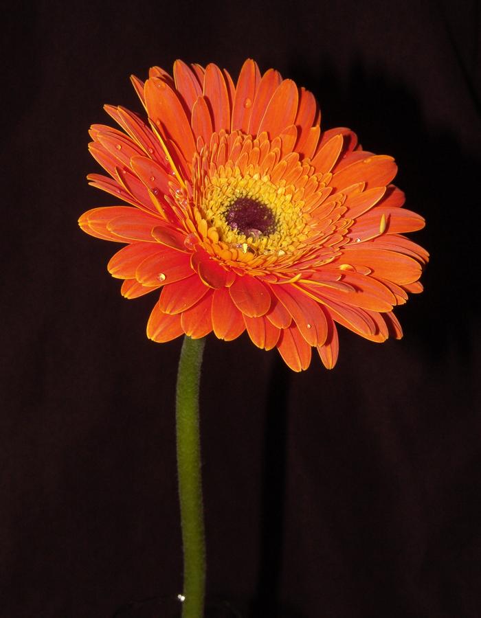 Poesía de Flores