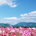 Poema – Las flores un amigo