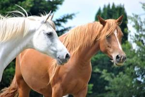 poema caballos poesia a la carta